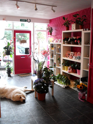 Lily Lovedays shop interior 4